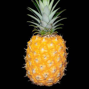Arôme secondaire du vin, les arômes d ananas peuvent se retrouver dans le Sémillon ou des grands crus d Alsace.