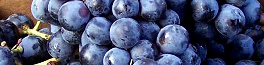 Cabernet franc - Caractéristiques, histoire, terroirs et arômes sur le guide du vin en ligne de votre caviste Tastavin