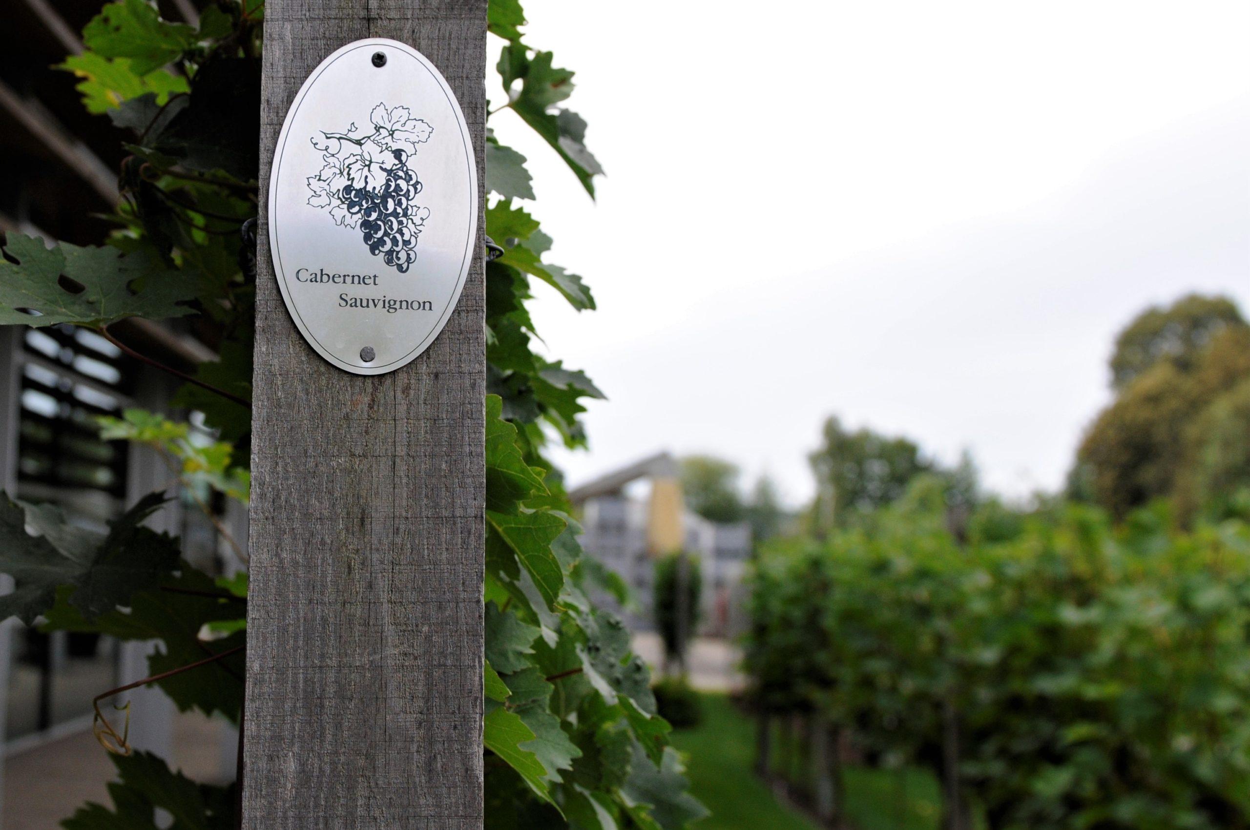Cabernet sauvignon et ses arômes, caractéristiques et terroirs sur le guide du vin en ligne de Tastavin, votre spécialiste en vin francais.