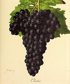 Chatus sur le guide du vin en ligne de Tastavin - Vente de vin sur internet et livraison en France et dans toute l Europe
