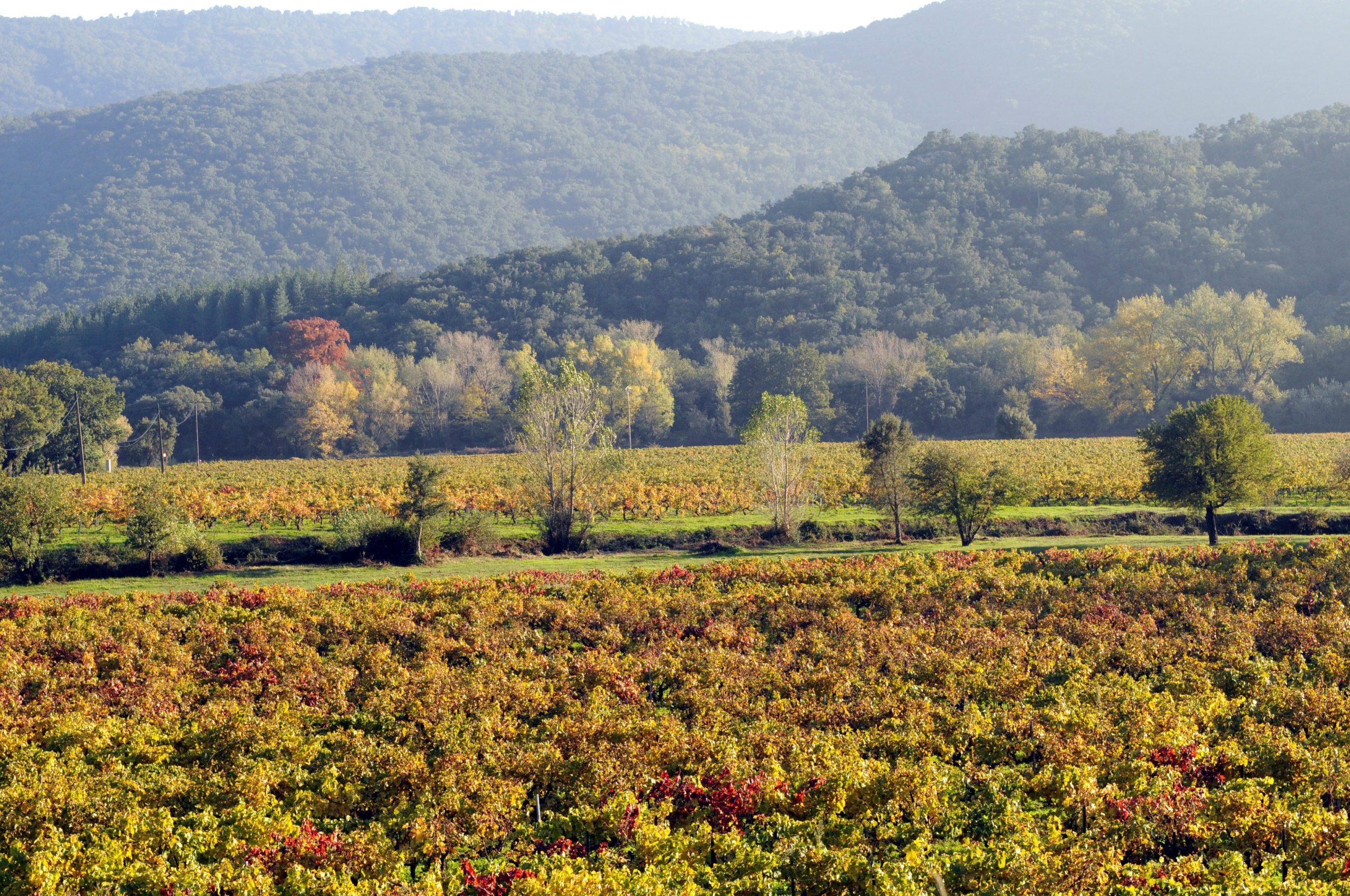 Retrouvez les caractéristiques et description du cépage Rolle sur le guide du vin en ligne de votre caviste Tastavin.