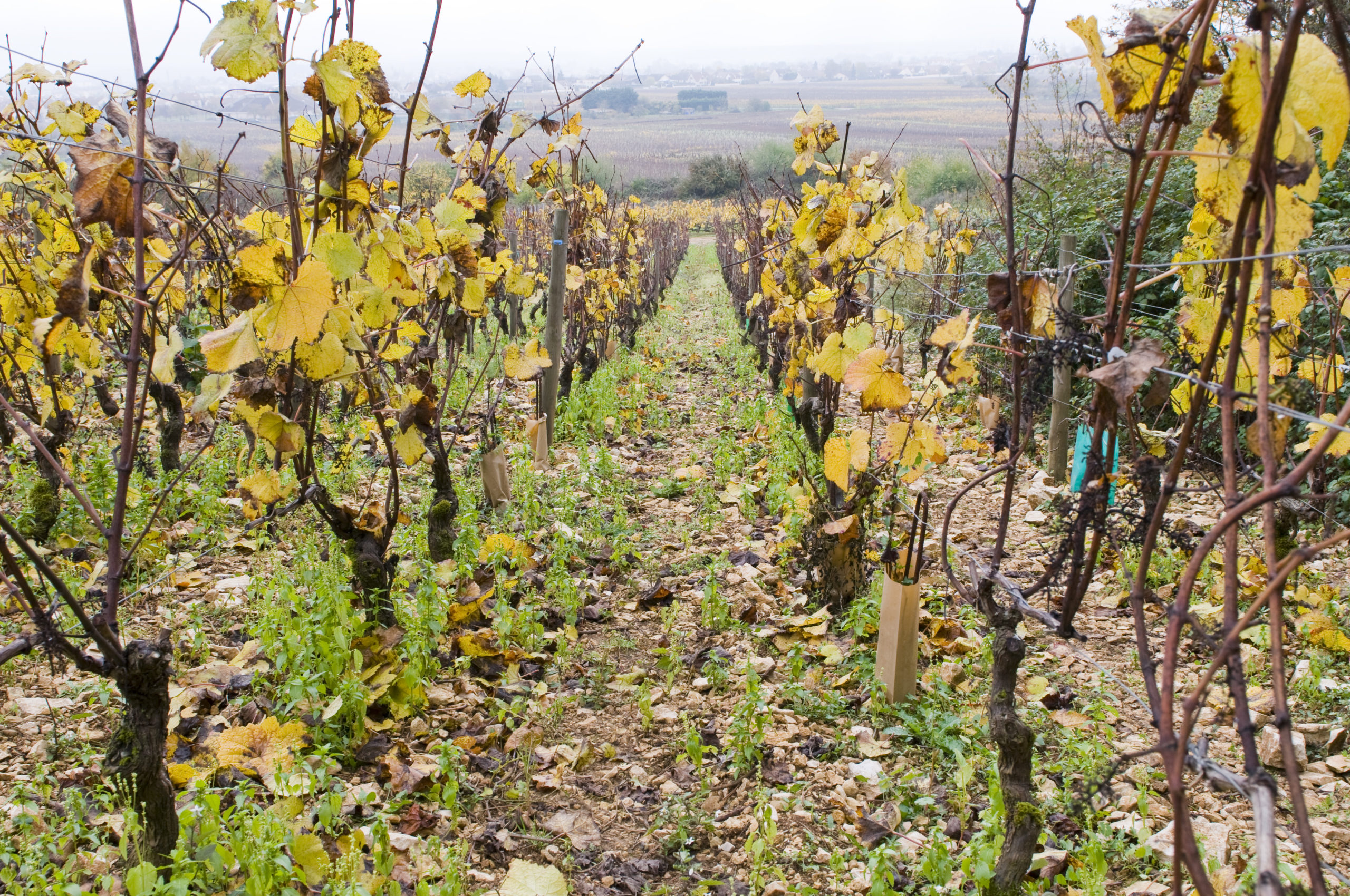 Vignoble de Bourgogne - Guide du vin en ligne - Tastavin caviste sur internet