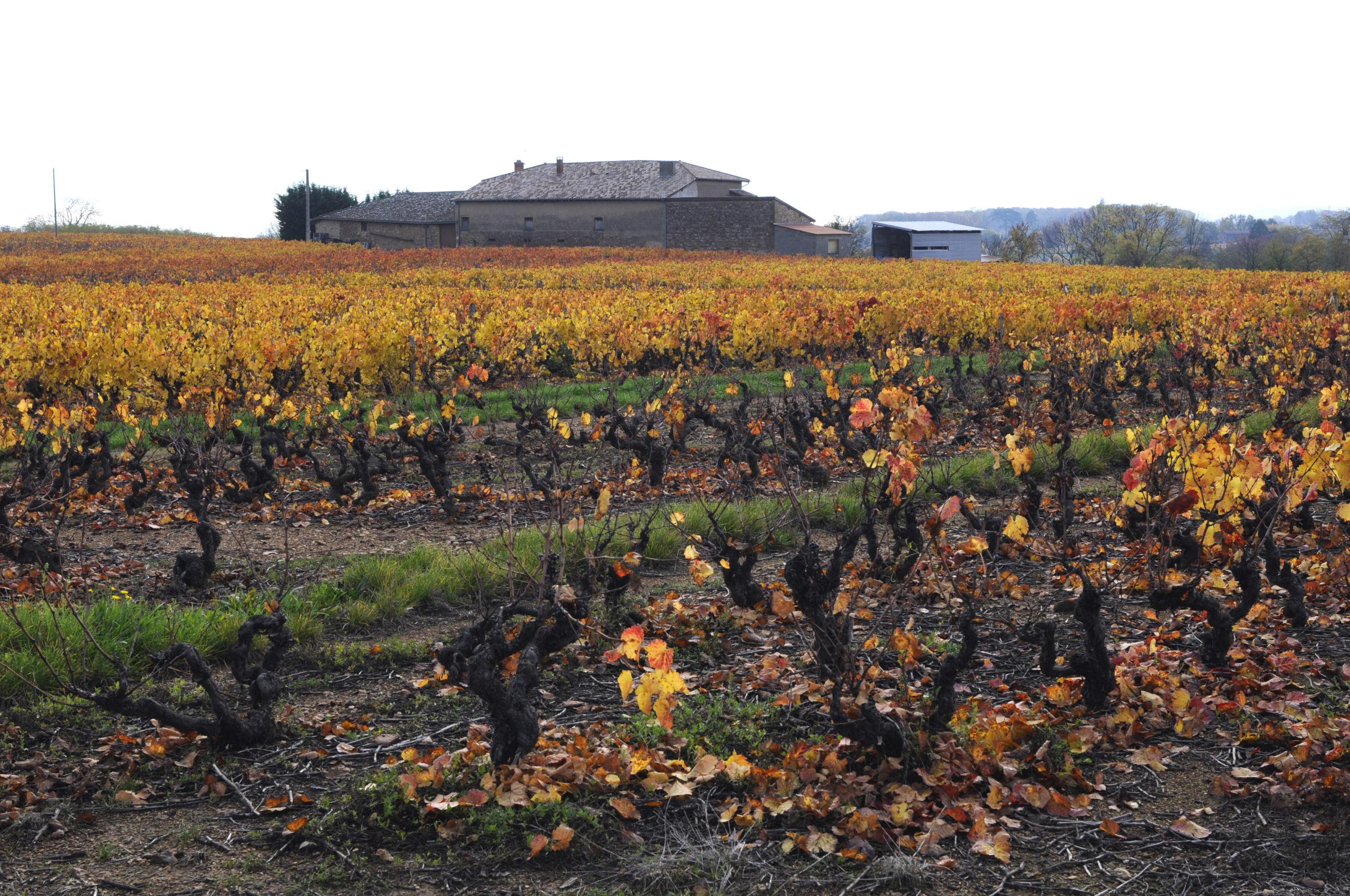 Vignoble de la vallée du Rhône sur le guide du vin en ligne de Tastavin