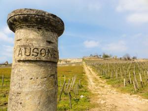 Classement des vins de Saint-Émilion - Saint-Emilion au mois de mars 2016 après la taille des vignes.