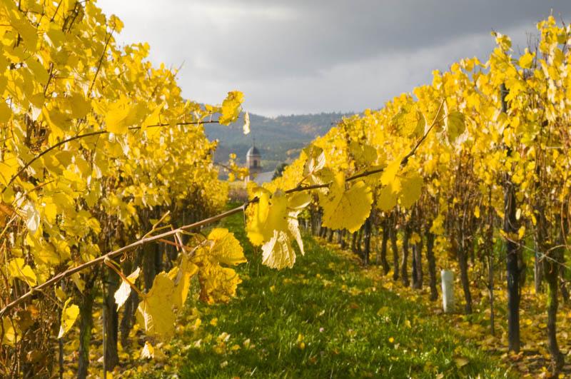 Commande de vin blanc en ligne auprès d un véritable caviste Tastavin