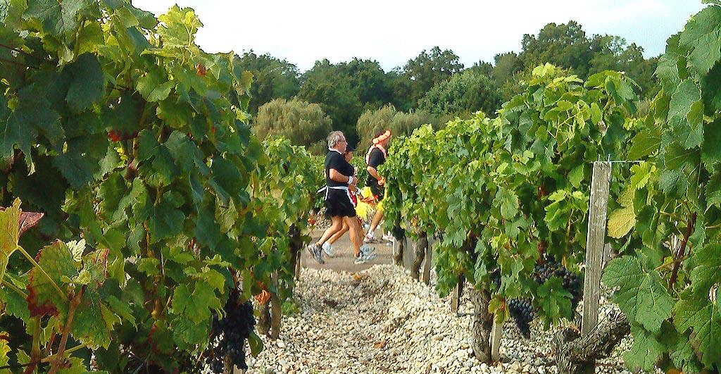 Courses à pied au milieu des vignobles pour les amateurs du vin - Blog du vin et actualités de Tastavin