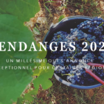 Vendanges 2020 - Bilan région par région qui annonce un très bon millésime - Tastavin votre expert en vin en ligne