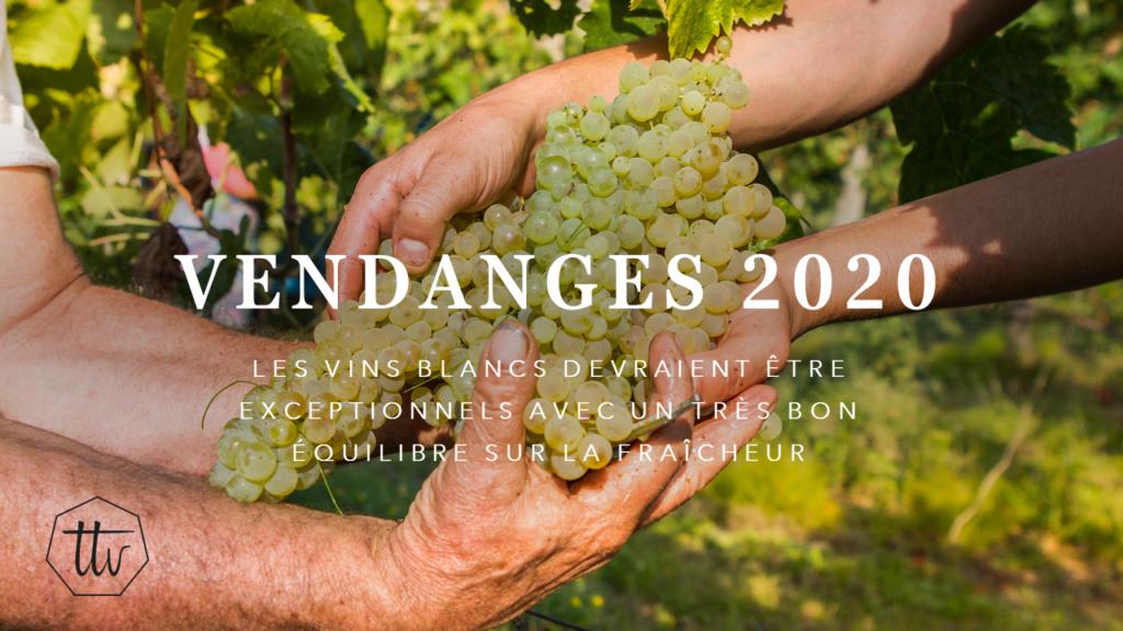 Vendanges 2020 - La qualité des vins blancs devrait être exceptionnel avec un équilibre parfait entre le fruit et la fraîcheur.