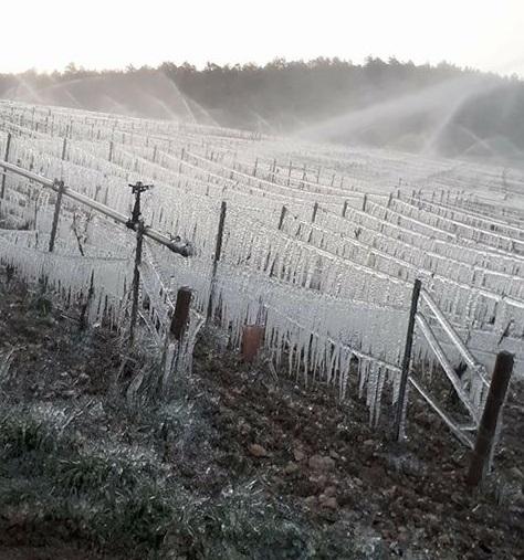 Vigne aspergée pour protéger contre le gel - Blog du vin de Tastavin
